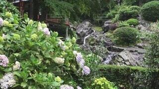 花,雨,滝,紫陽花,梅雨,アジサイ