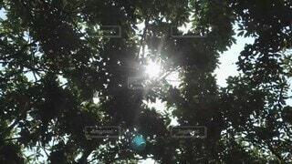 自然,鳥,森,林,木漏れ日,日差し,鳴き声,紫外線