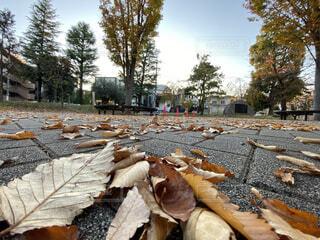 空,秋,屋外,景色,落ち葉,樹木,落葉,眺め