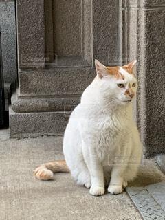 猫,建物,動物,屋外,白,座る