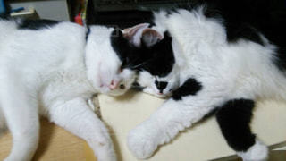 猫の写真・画像素材[241599]