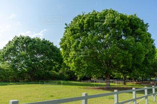 自然,公園,木,太陽,緑,晴れ,青空,晴天,爽やか,新緑,癒し,休日,リフレッシュ,エコ,環境