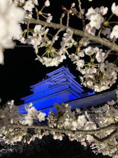 鶴ヶ城ライトアップの写真・画像素材[4466471]
