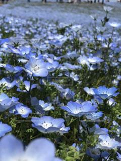 花,ブルーム,フローラ
