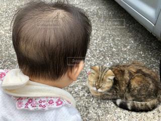 猫,動物,かわいい,人,赤ちゃん