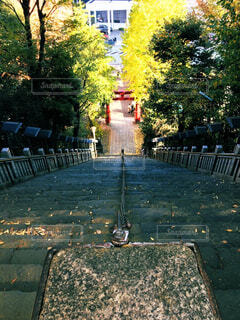 公園,秋,屋外,水面,樹木,噴水