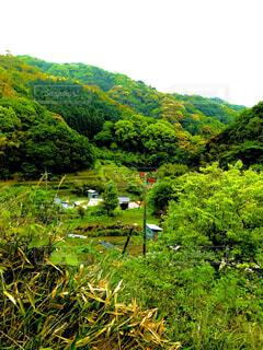 自然,風景,花,屋外,山,草,樹木,草木