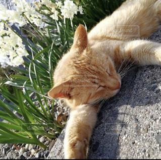 猫,屋外,景色,岩