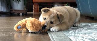 犬,動物,かわいい,可愛い,子犬,雑種