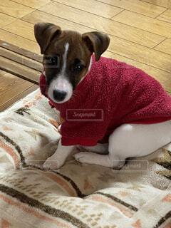 犬,動物,屋内,景色,毛布,子犬,ベッド