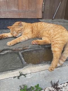 猫,動物,屋外,景色,オレンジ,寝る,地面