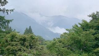 背景に山のある木の写真・画像素材[4468420]