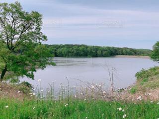 自然,風景,空,屋外,湖,川,水面,草,樹木