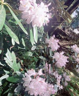 花,屋外,草木,菌,フローラ