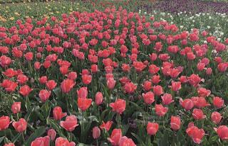 花,春,赤,草木,ガーデン,フローラ