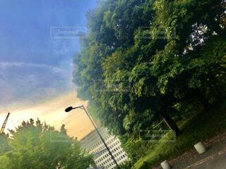 夕日の公園の写真・画像素材[4468533]