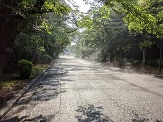 屋外,樹木,道,歩道,地面,通り,パス