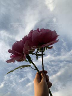 自然,空,花,屋外,ピンク,雲,バラ,花びら,フローラ