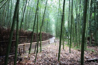 自然,森林,屋外,緑,樹木,竹,木立,竹林,地面,雨上がり,散歩道,草木,エリア