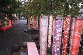 屋外,京都,樹木,着物,地面,雨上がり,雅
