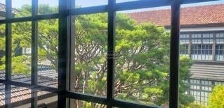 建物,屋内,窓,樹木,学校,思い出,旧校舎,草木