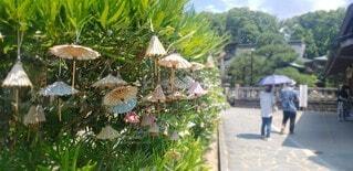 傘,屋外,神社,樹木,おみくじ,お参り,願い事