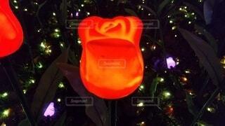 屋外,チューリップ,樹木,イルミネーション,明るい,イルミ,クリスマス ツリー