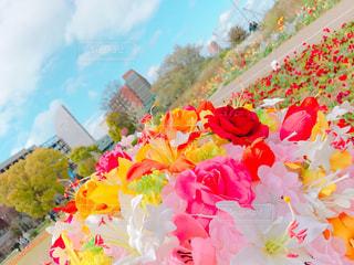 花の写真・画像素材[418777]
