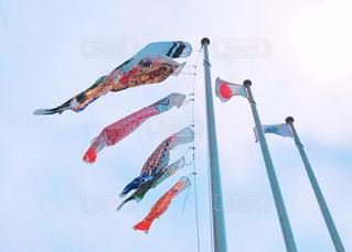 鯉のぼり - No.461470