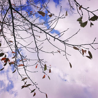 木の上に座って鳥の群れ - No.873878