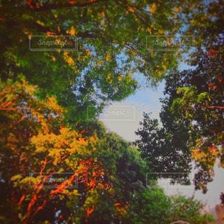 近くの木のアップ - No.873896