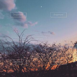 空の木 - No.888193
