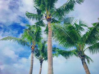 海,空,綺麗,沖縄,旅行,ヤシの木