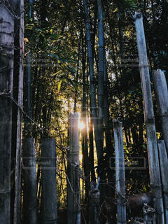 近くの木のアップの写真・画像素材[1158082]