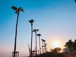 街に沈む夕日の写真・画像素材[1248172]