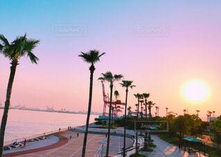 海,空,夏,夕日,太陽,ヤシの木,神戸,兵庫,六甲アイランド
