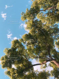 風景,空,公園,秋,木,屋外,綺麗,夕暮れ,夕方,樹木,秋空,草木
