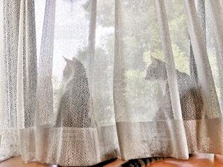 猫,屋内,白,窓,カーテン,家具