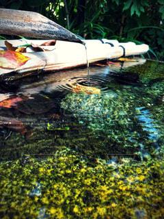 水面と鹿威しの写真・画像素材[4530973]