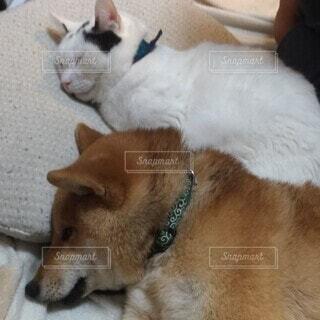 犬,動物,屋内,かわいい,ヌコ,イッヌ,仲良し?,第4コーナーのデッドヒート