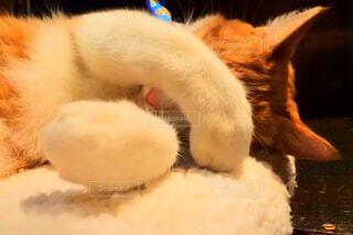 猫,動物,屋内,かわいい,オレンジ,子猫,モフモフ,かくれんぼ