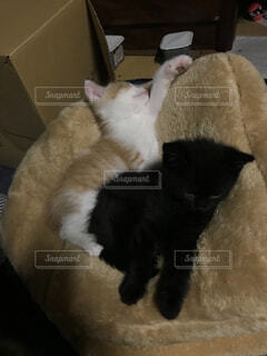 猫,動物,屋内,黒,子猫,ネコ科