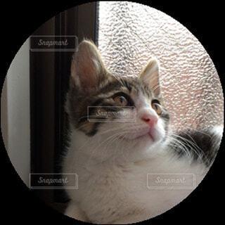 猫,屋内,子猫