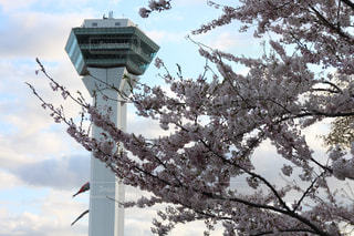 桜の写真・画像素材[467892]
