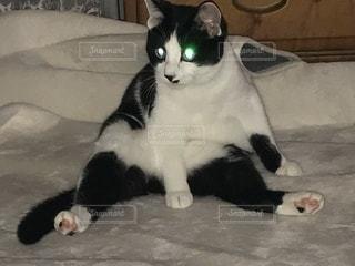 その口を開いて黒と白猫の写真・画像素材[1001349]