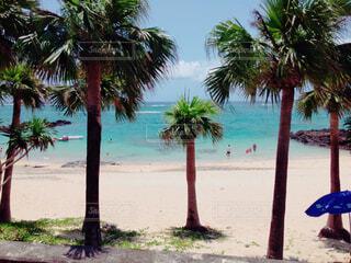 海,空,屋外,ビーチ,水面,樹木,ヤシの木,奄美,草木,パーム,熱帯,ヤシ目