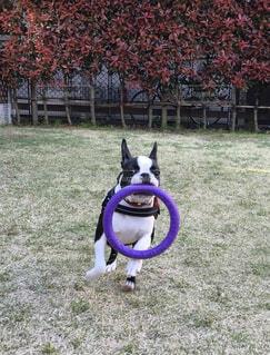 犬,動物,屋外,草