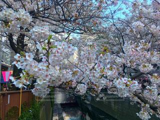 春の写真・画像素材[411429]