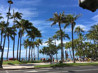 ハワイの日常の写真・画像素材[4509057]