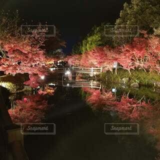風景,夜景,水面,イルミネーション,ライトアップ,水鏡